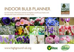 Charity partner shares indoor bulb planner guide